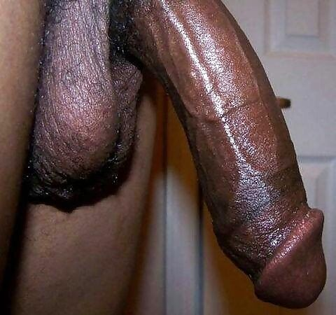Black Cock Pictures